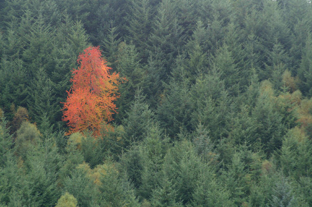 Different Colored Trees - Image Credit Mike Pennington used under Creative Commons Licence.